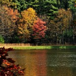 Tumbling Waters Trail / Pickeral Pond